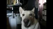 Куче пее на сирени