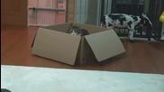 Кутия, Мару и Хана
