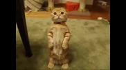 Малко Коте, Което Стои Право Като Човек