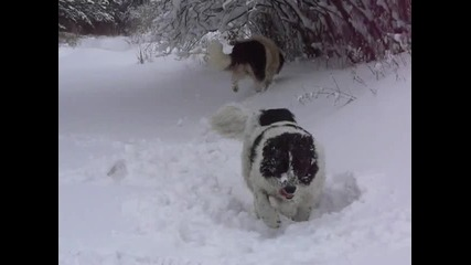 Ала и Рила в снега