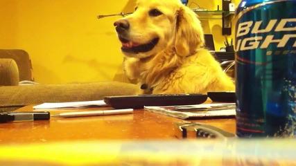 Куче се кефи на китара