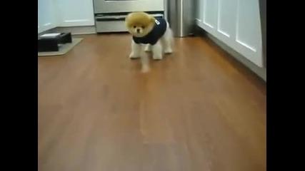 Просто най-сладурското куче на света! Boo (: