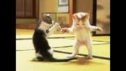 ориенталски котки