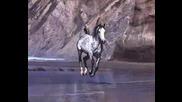 Висотски - кони Привередливые