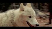 Братството на вълците - Бг Аудио ( Високо Качество ) Част 2 (2001)