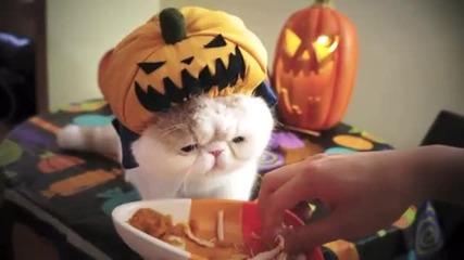 Сладко Котенце похапва сладко сладко.