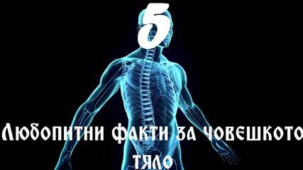 5 Любопитни факти за човешкото тяло