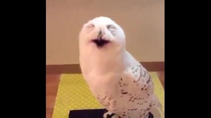 Funny Супер смях Сова се смее !!!!!!!!