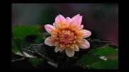 Валс на цветята