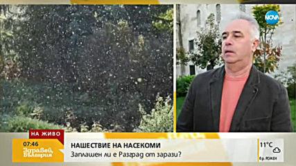 Нашествие от мушици: Заплашен ли е Разград от зарази?