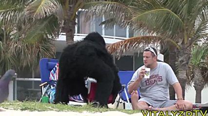 Бау! Не ми пипай бананите!