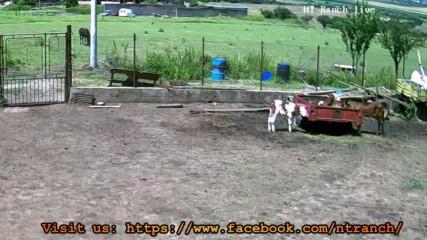 Ht Ranch