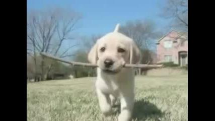 Cute Adorable Animals Photo Slideshow