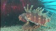 Красота - Подводния свят на остров Бали [hd]