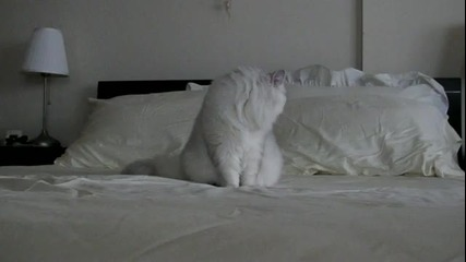 Красива котка откача върху леглото