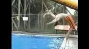 Неуспешен опит за скок в басейт - смях