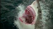 Невероятни оцелявания след нападение от акула..