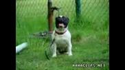 куче което не лае ,а скимти