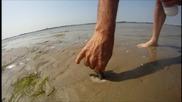 Как да хванеш Razor Fish