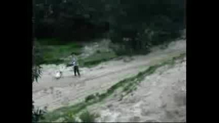 Kimu American Pitbull Terrier
