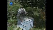 Насаме с пчелите(bg Audio) 10 част