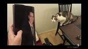 Котка мрази Justin Bieber