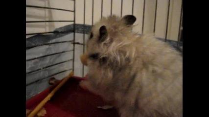 Ненаситно мише :)