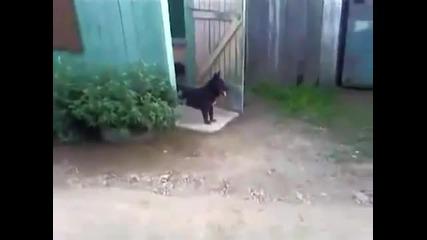 Куче и врата