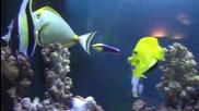 Много красива риба - Naso lituratus