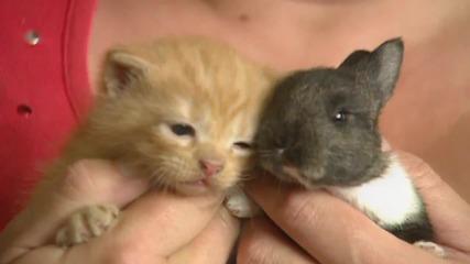 Котка осиновява бебе зайче