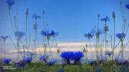 А. Иванов - Полевые цветы