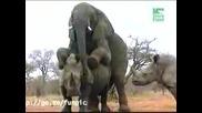 Слон Опъва Носорог На Задна :) Дзъма