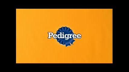 Pedigree Commercial - Ние виждаме любовта