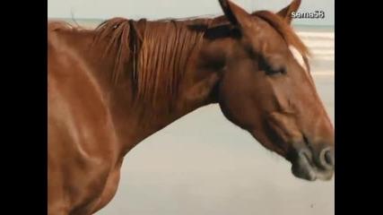 Ой,чей-то конь стоит...