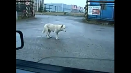 Смешен танц с куче