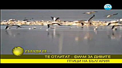 Топлият рай за прелетните птици