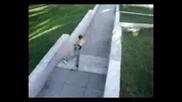 Freerun - Russian Climbing Ninjas