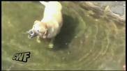 Куче лови риба