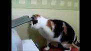 Котка срещу принтер (смях)