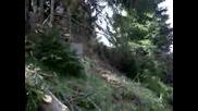 Широка Лъка - Поваляне На Дърво 2