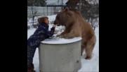 Може ли огромен мечок да бъде приятел с нежно момиче???