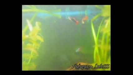 Рибки аквариум