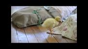 Детски песнички - Малките животни