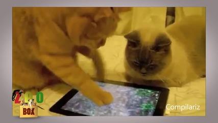 Когато котката ти има таблет, а ти - не! Супер смешна техно-животинска компилация!