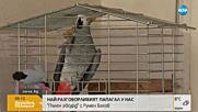 """""""Пълен абсурд"""": Най-разговорливият папагал у нас"""