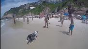 Куче играе с приятелите си на плажа! :)