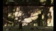 Тайнствени досиета - Робин Худ