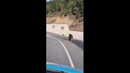 Мечка на пътя