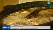 Каква риба ни сервират край морето - прясна или замразена?