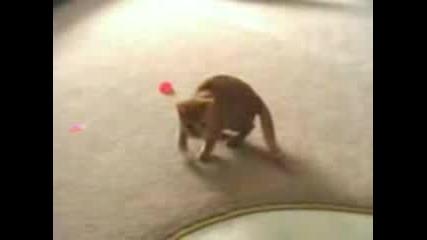 Луда Котка :p